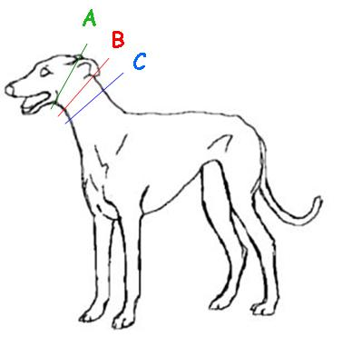 How to measure your dog for a Martingale dog collar